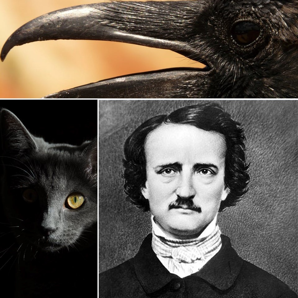 literature  biography edgar allan poe life macabre