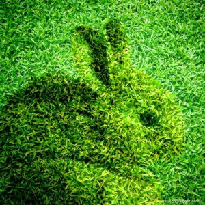 Eduardo Kac and a Glowing Green Bunny