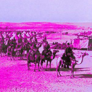 Battlefield Beasts – On Camel Cavalry in Desert Warfare